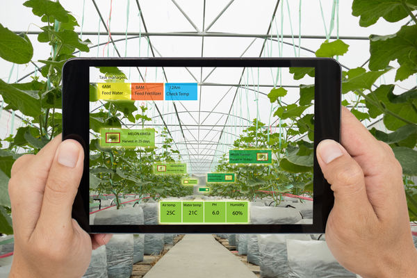 Smart agriculture concept; Farmer use Artificial intelligence and augmented reality in farm to help grow systems.