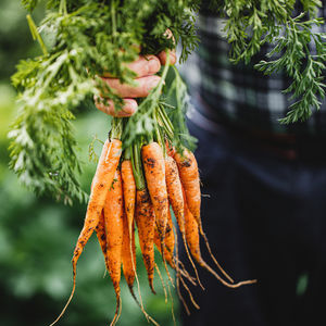 A man holding a bunch of fresh carrots