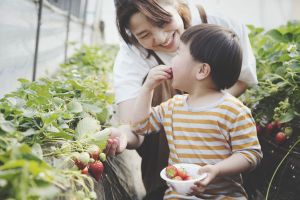 Mother and child eating strawberries